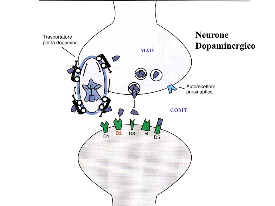 Neurone Dopaminergico