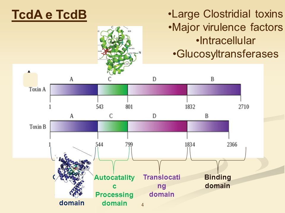 TcdA e TcdB Large Clostridial toxins Major virulence factors