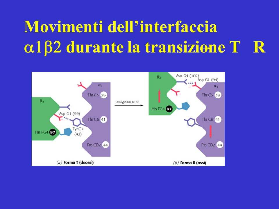 Movimenti dell'interfaccia durante la transizione T R