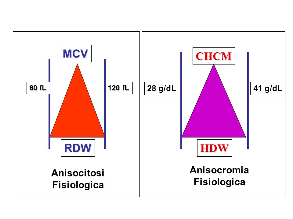 CHCM HDW RDW MCV Anisocromia Anisocitosi Fisiologica Fisiologica