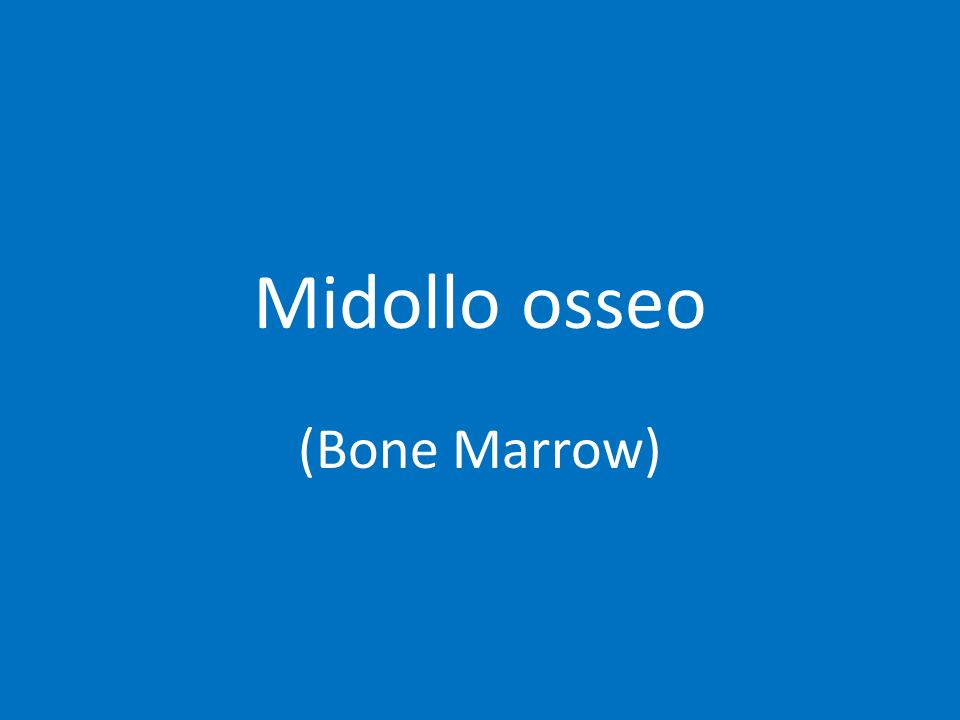 Midollo osseo (Bone Marrow)