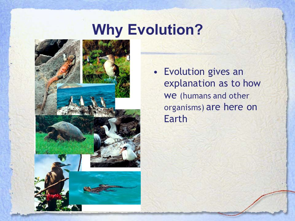 Why Evolution.