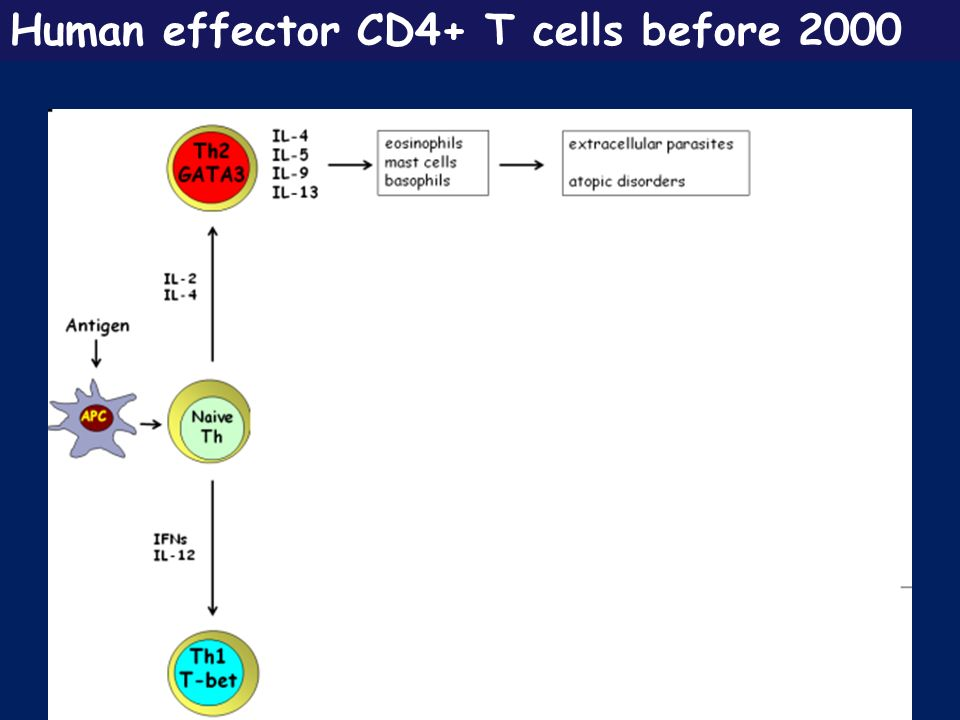Human effector CD4+ T cells before 2000