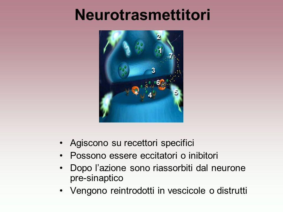 Neurotrasmettitori Agiscono su recettori specifici