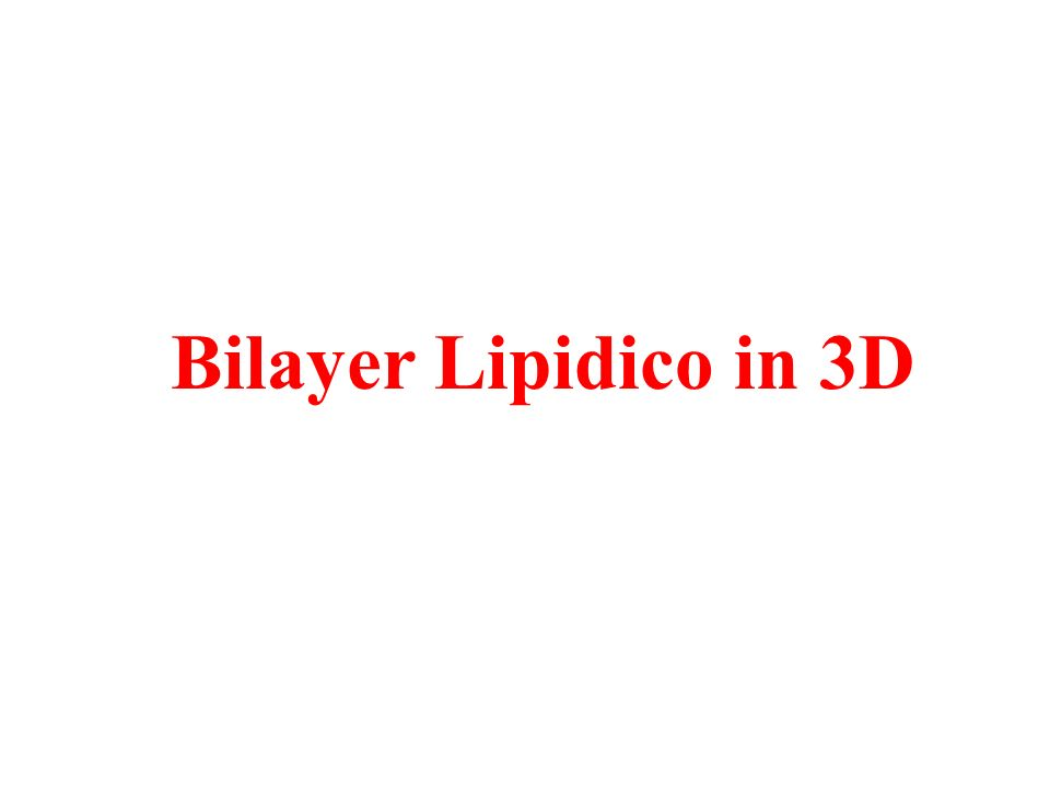 Bilayer Lipidico in 3D