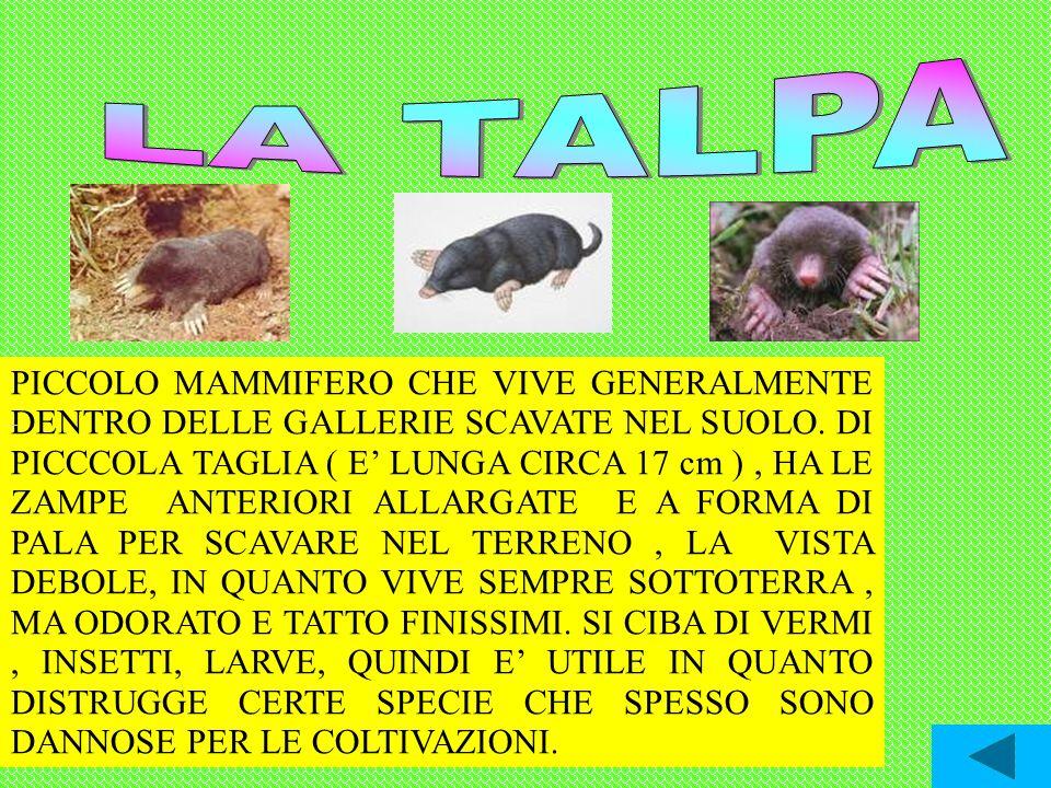 Alla scoperta dei diversi ambienti ppt video online for Talpa mammifero