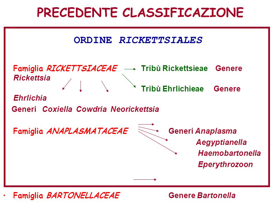 PRECEDENTE CLASSIFICAZIONE