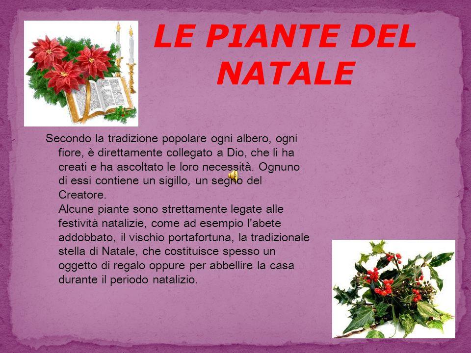 Significato Della Stella Di Natale.Le Piante Del Natale Secondo La Tradizione Popolare Ogni Albero