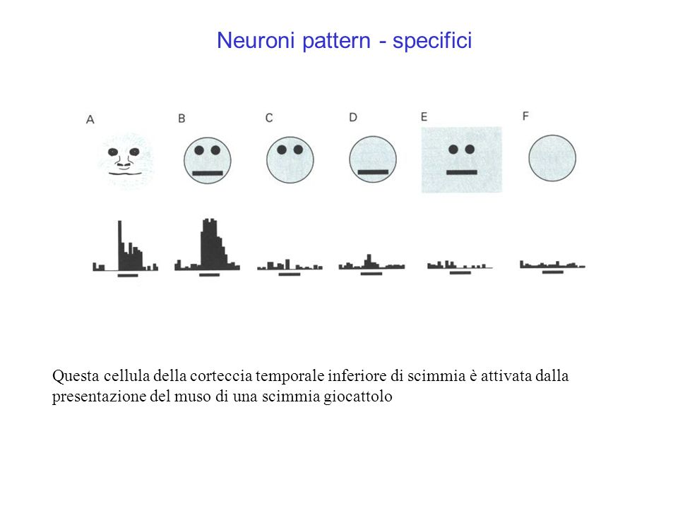 Neuroni pattern - specifici