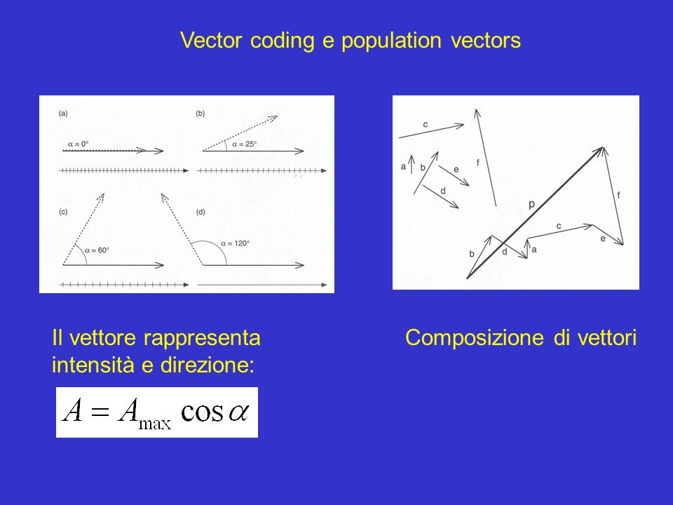 Vector coding e population vectors