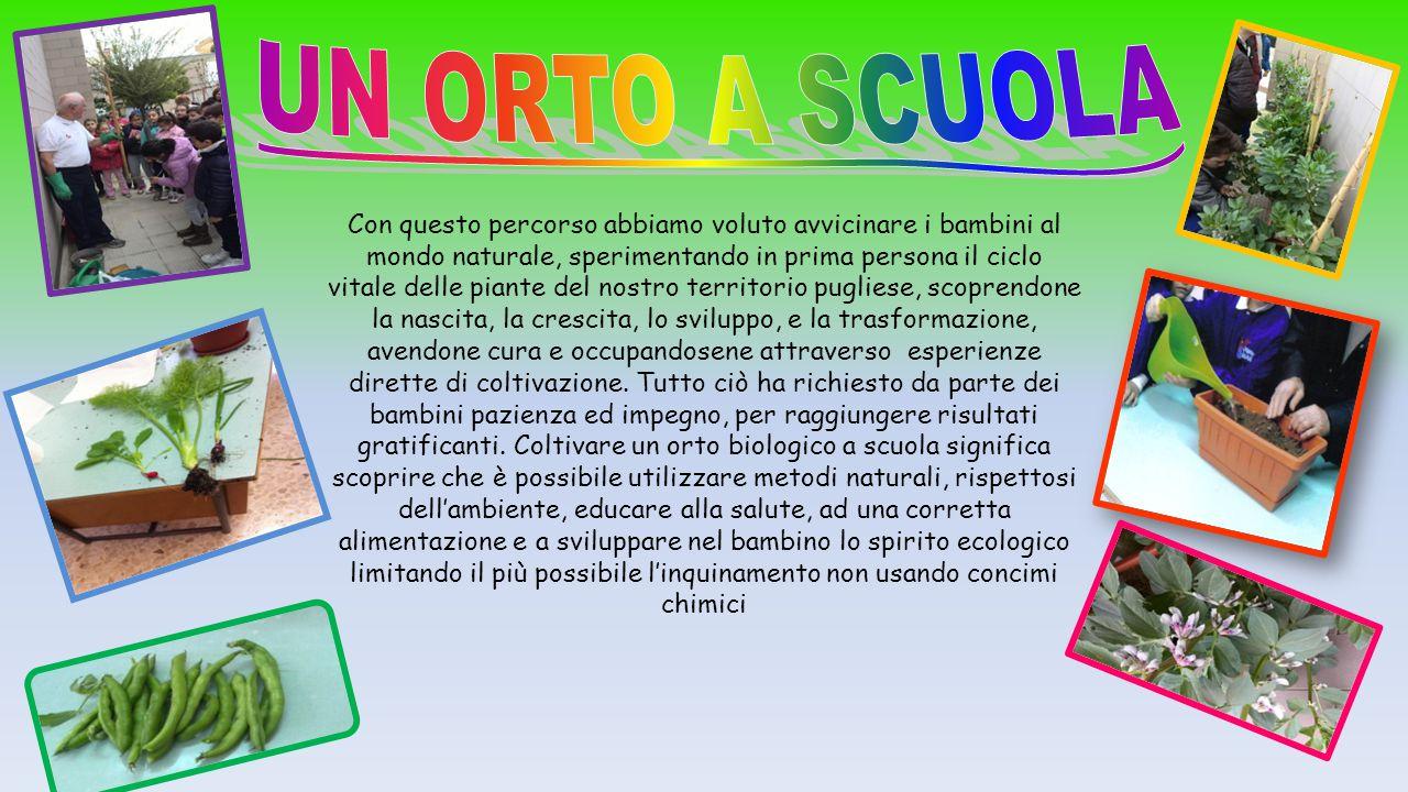 UN ORTO A SCUOLA Classi quarte XVII C D  Poggiofranco - ppt