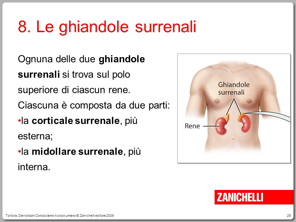 8. Le ghiandole surrenali