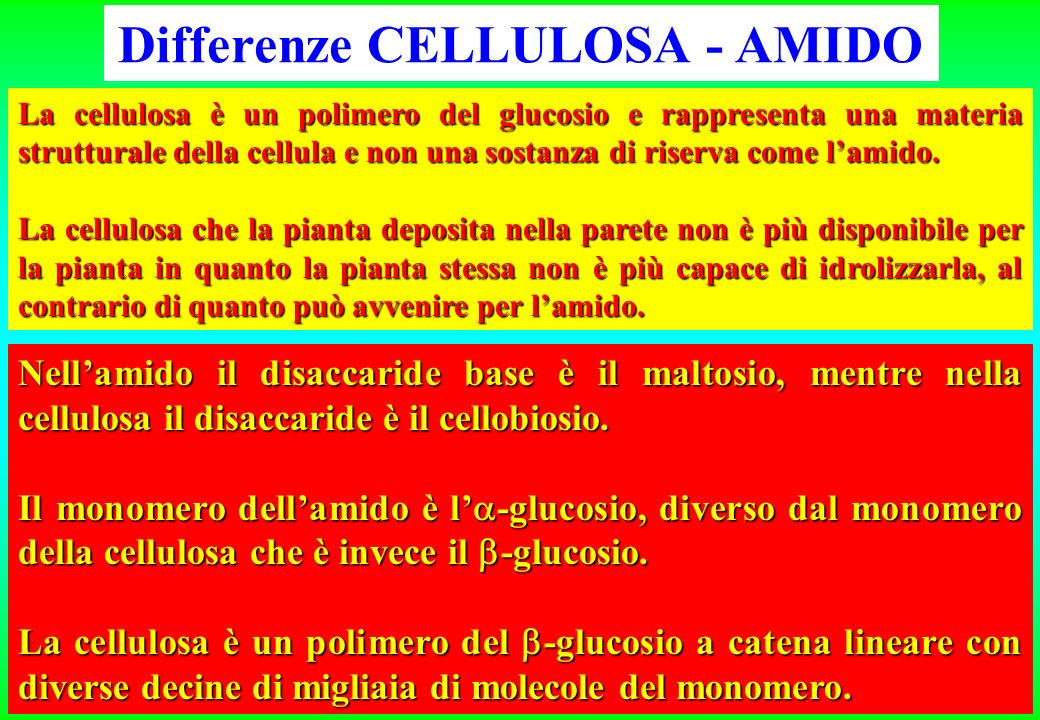 Differenze CELLULOSA - AMIDO