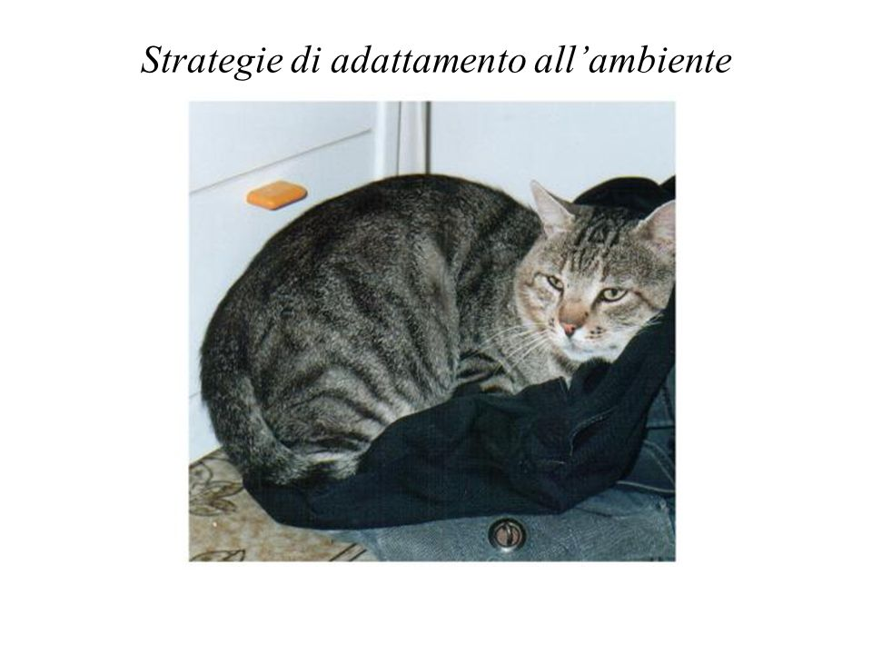 Strategie di adattamento all'ambiente