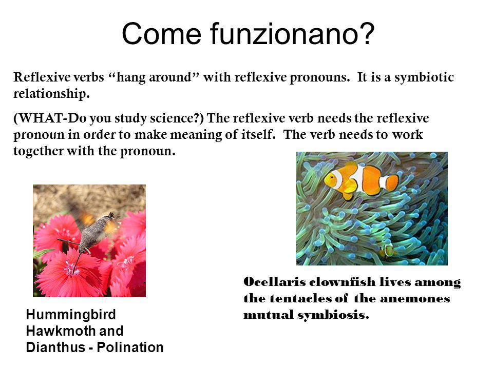 Come funzionano Reflexive verbs hang around with reflexive pronouns. It is a symbiotic relationship.