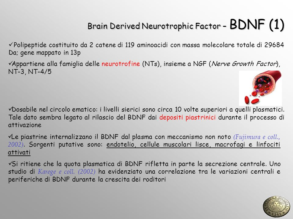 Brain Derived Neurotrophic Factor – BDNF (1)