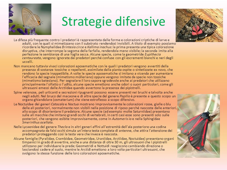 Strategie difensive