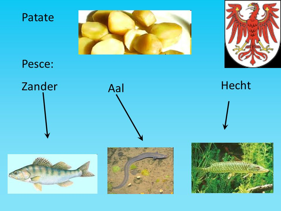 Patate Pesce: Zander Hecht Aal