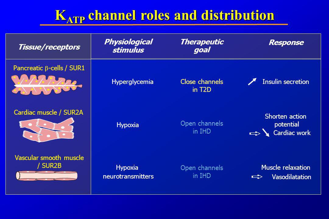 KATP channel roles and distribution