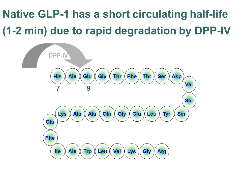 Native GLP-1 has a short circulating half-life (1-2 min) due to rapid degradation by DPP-IV