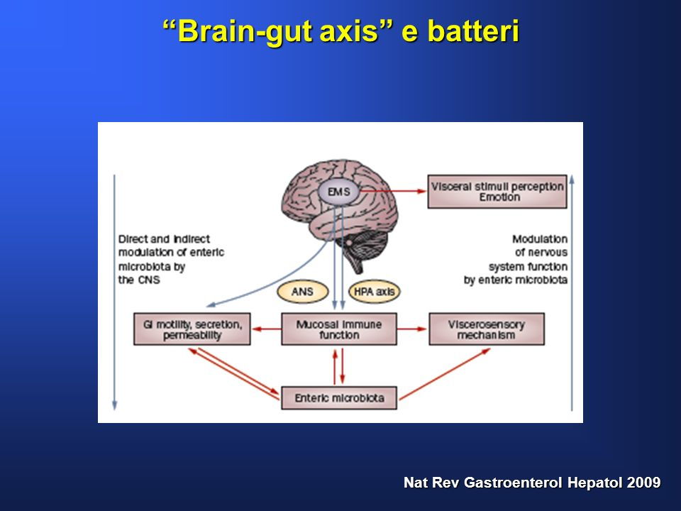 Brain-gut axis e batteri