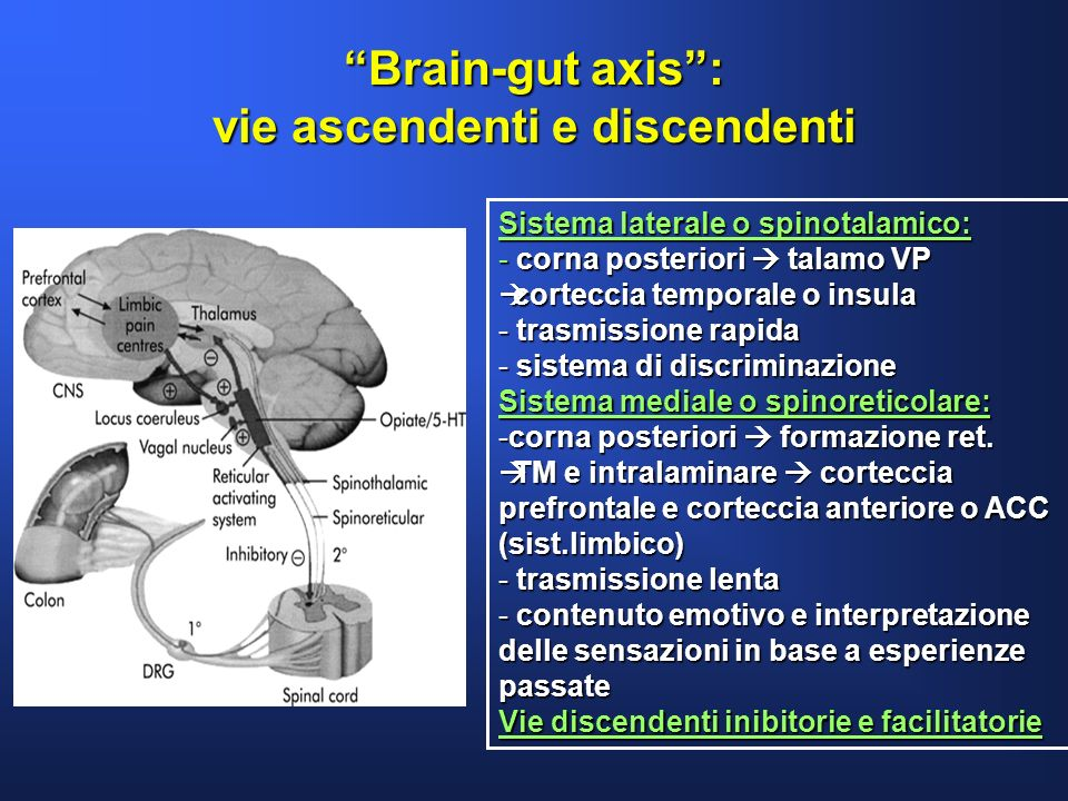 Brain-gut axis : vie ascendenti e discendenti