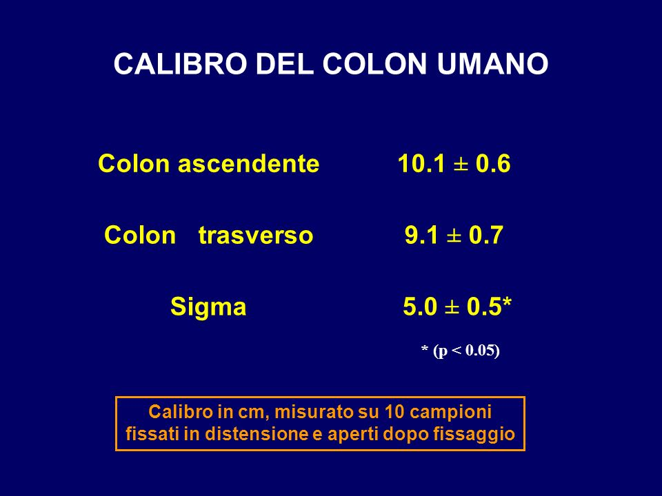 CALIBRO DEL COLON UMANO