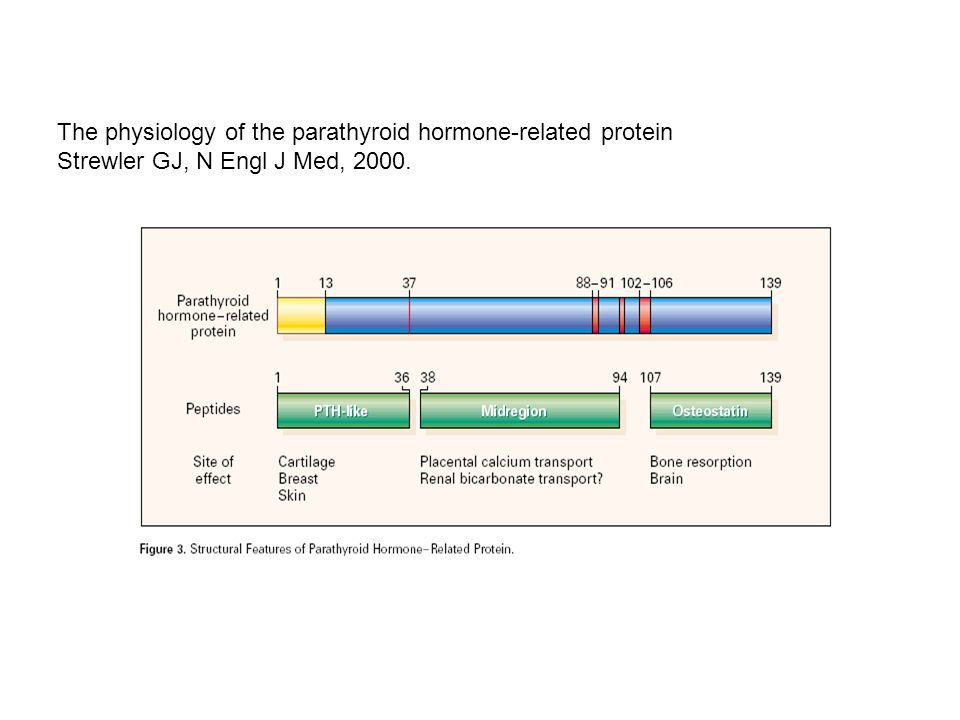 The physiology of the parathyroid hormone-related protein