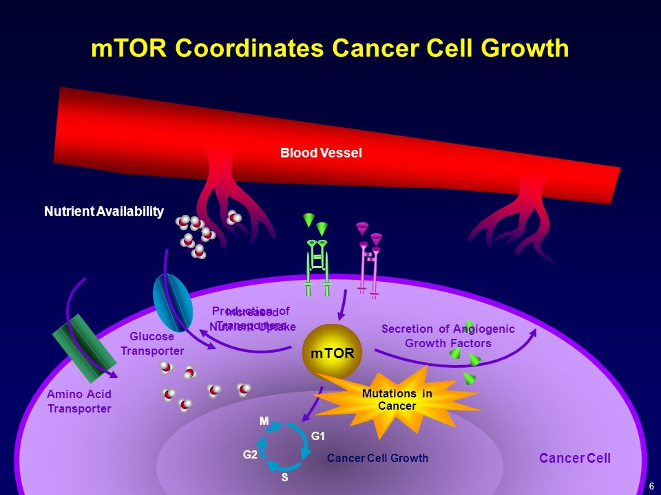 mTOR Coordinates Cancer Cell Growth