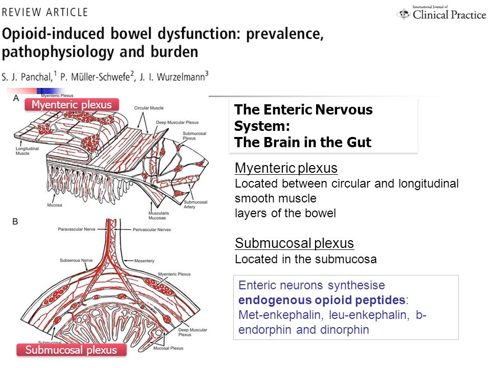 The Enteric Nervous System: The Brain in the Gut