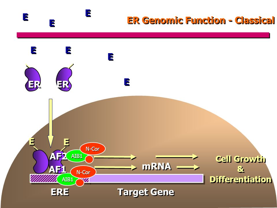 ER Genomic Function - Classical