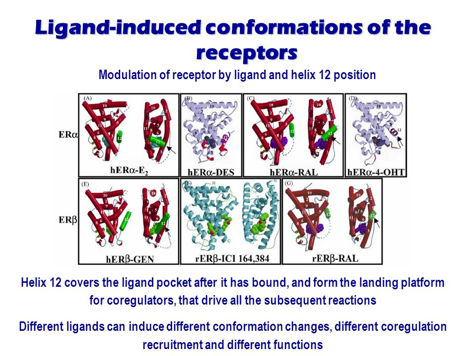 Ligand-induced conformations of the receptors