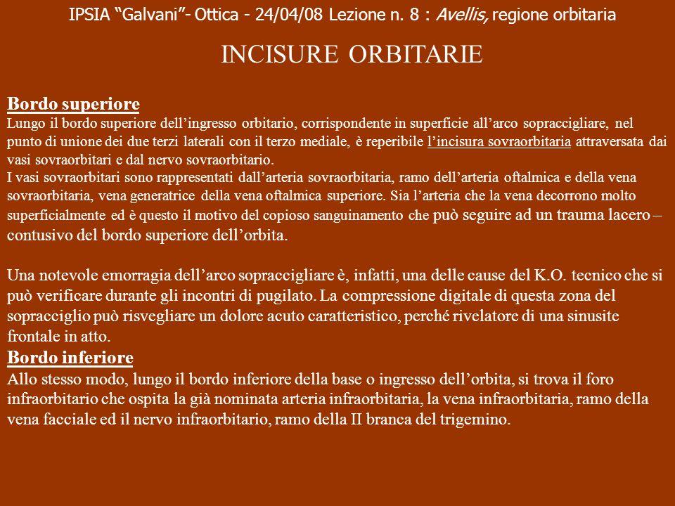 INCISURE ORBITARIE Bordo superiore Bordo inferiore