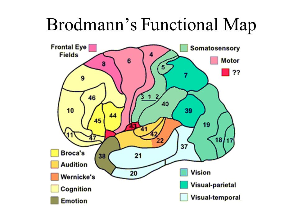 Brodmann's Functional Map
