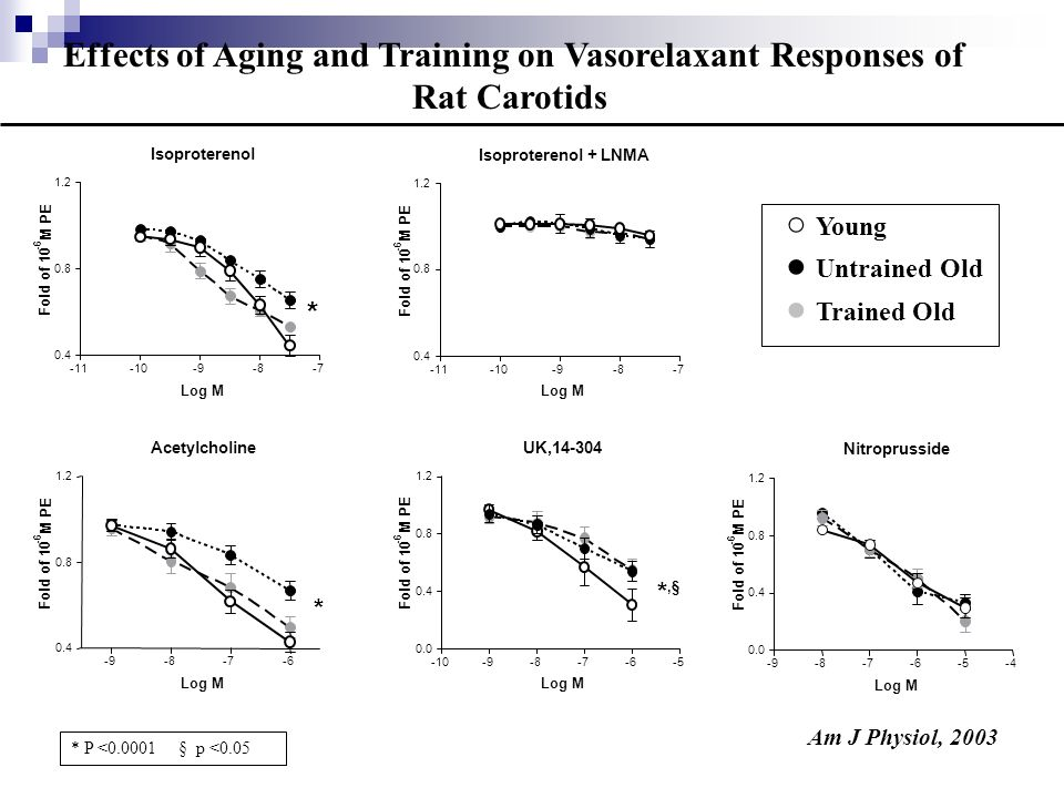 Effects of Aging and Training on Vasorelaxant Responses of