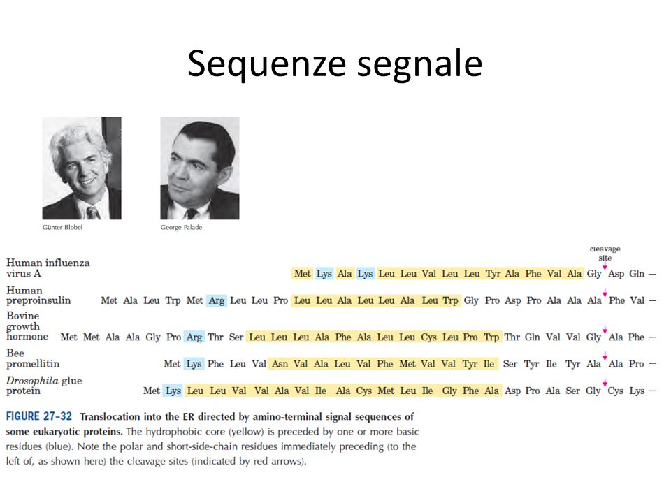 Sequenze segnale