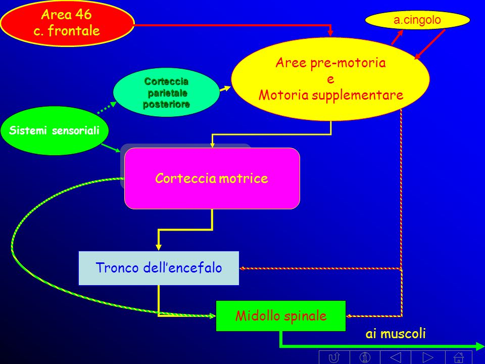 Motoria supplementare