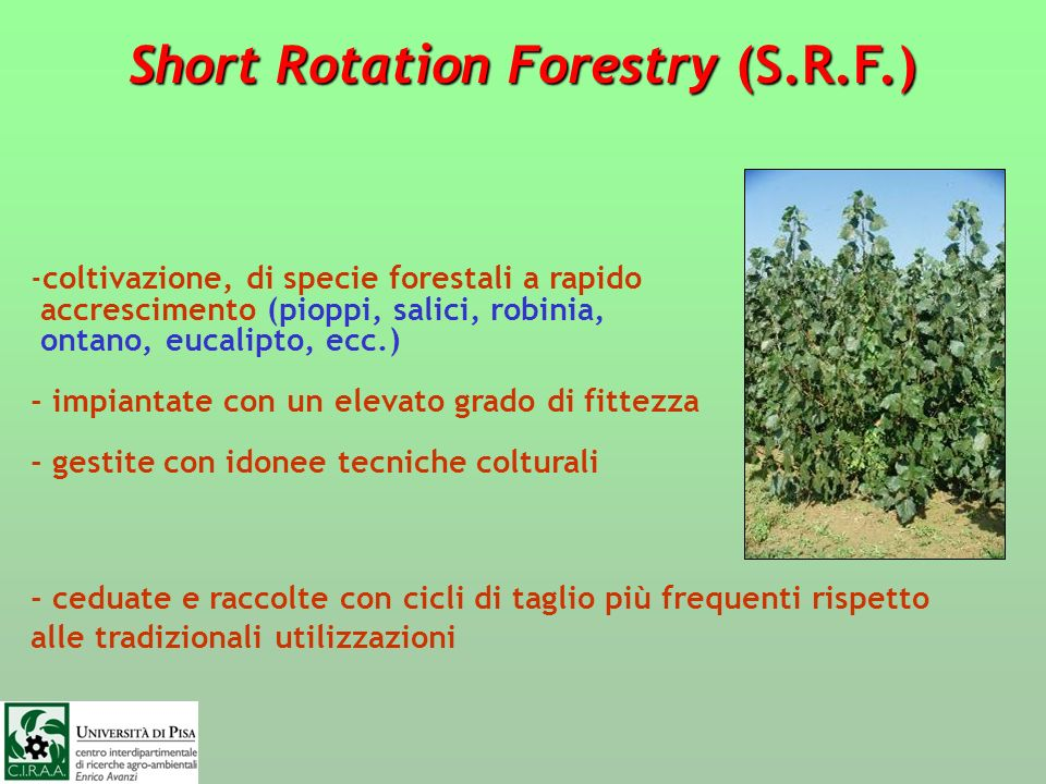 Short Rotation Forestry (S.R.F.)