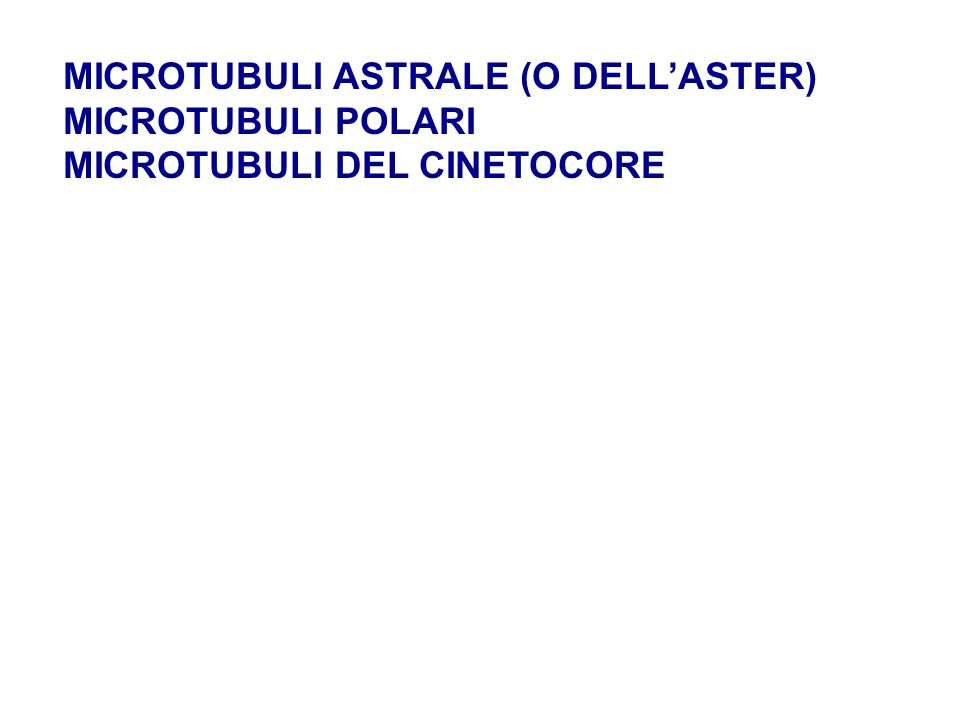 MICROTUBULI ASTRALE (O DELL'ASTER)