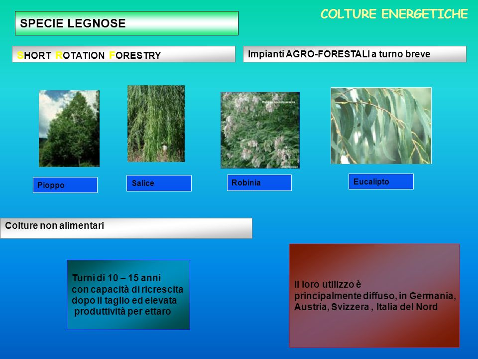 COLTURE ENERGETICHE SPECIE LEGNOSE SHORT ROTATION FORESTRY