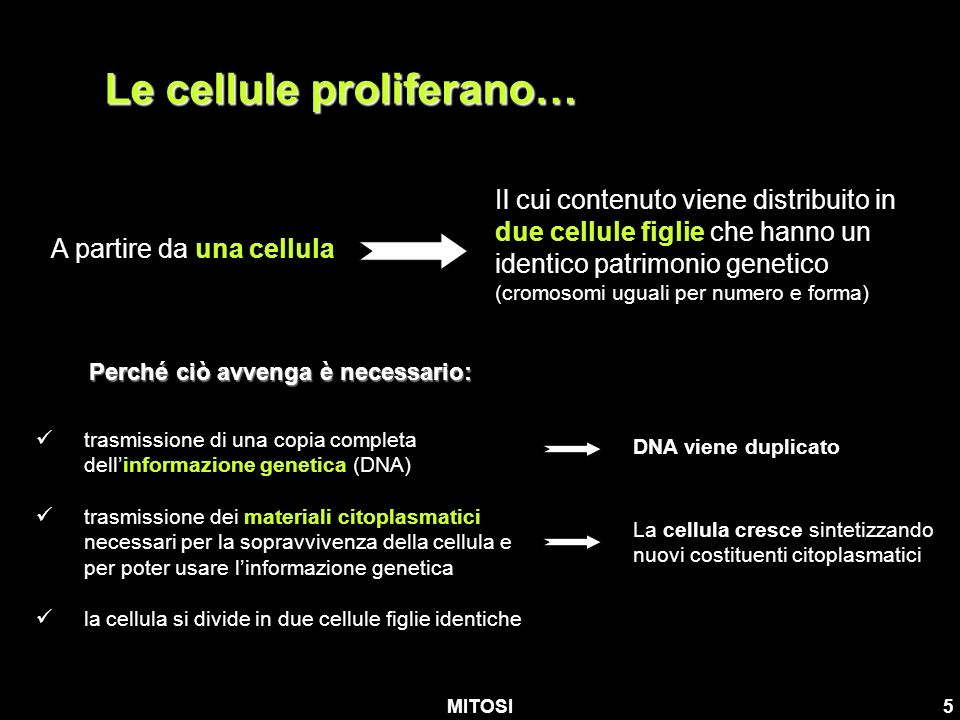 Le cellule proliferano…