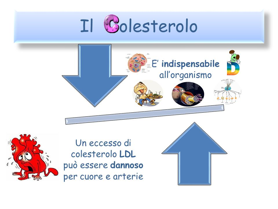 Il olesterolo E' indispensabile all'organismo