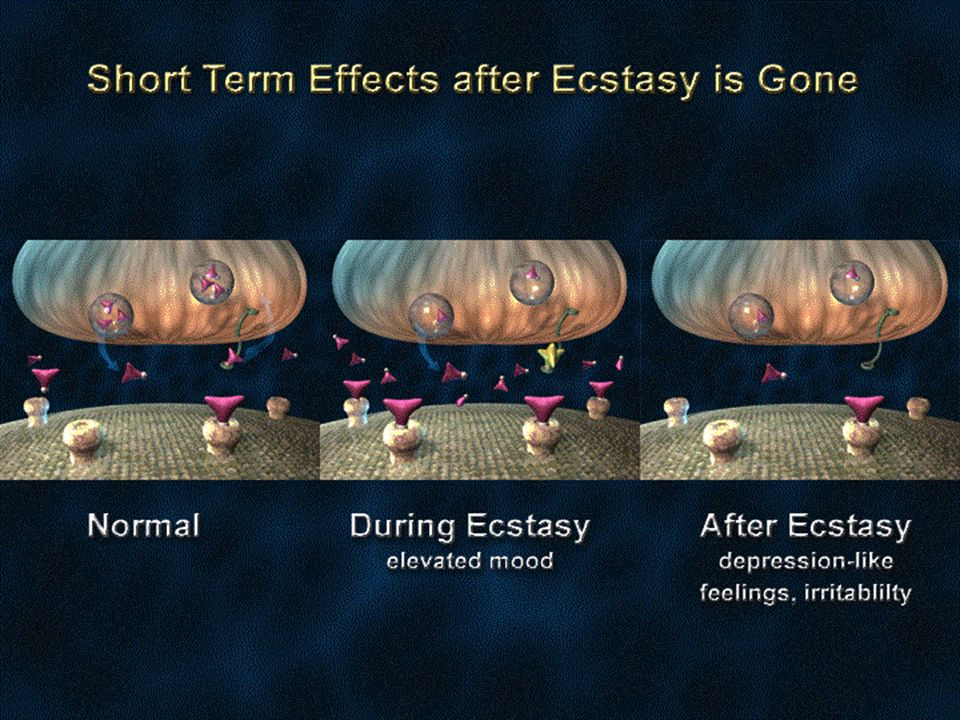Ecstasy is an unusual drug because it has effects on the brain that develop and persist for a short time after the drug is eliminated from the body.