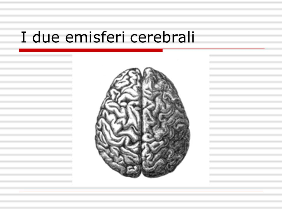I due emisferi cerebrali