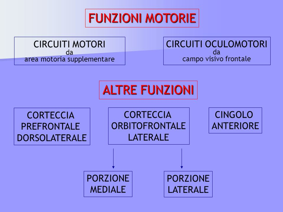 area motoria supplementare