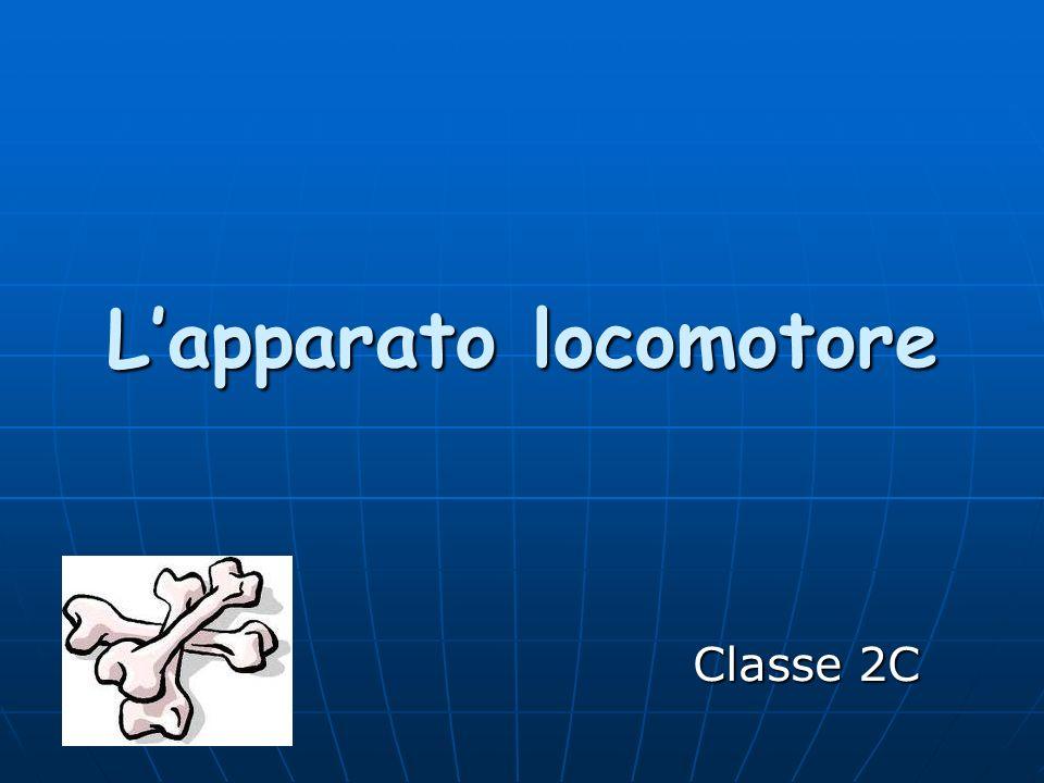 Ppt il sistema muscolare powerpoint presentation id:4703129.