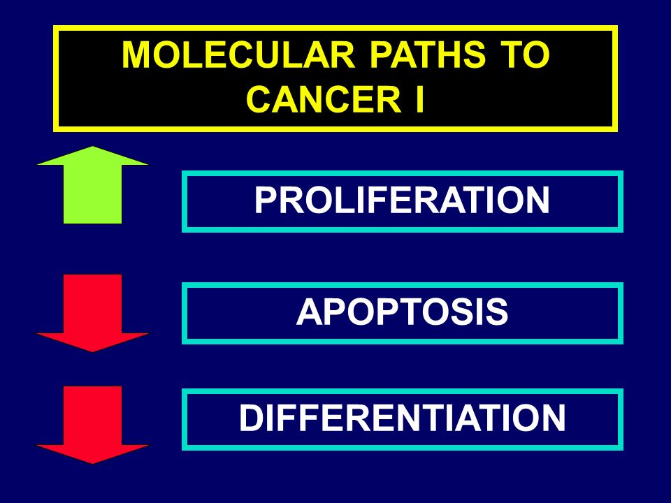 MOLECULAR PATHS TO CANCER I