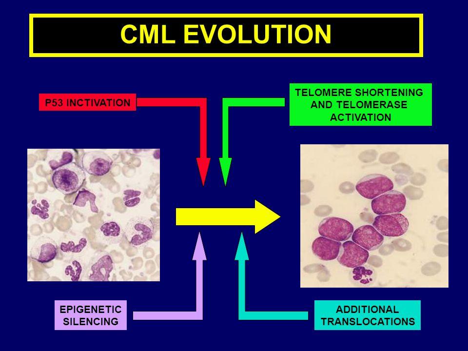 CML EVOLUTION TELOMERE SHORTENING AND TELOMERASE ACTIVATION