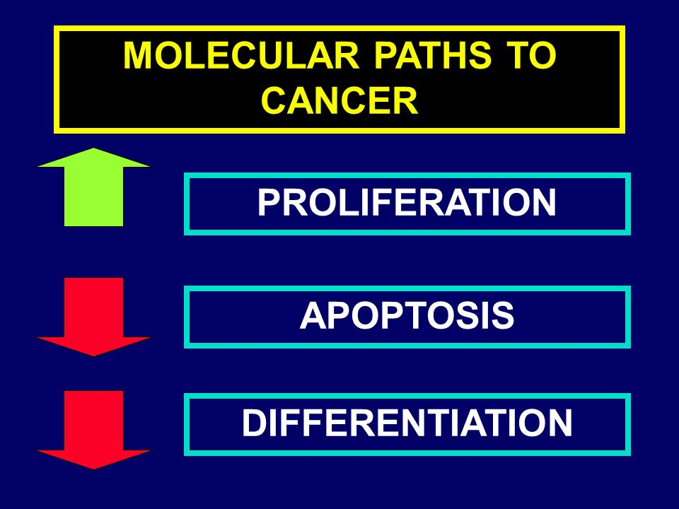 MOLECULAR PATHS TO CANCER