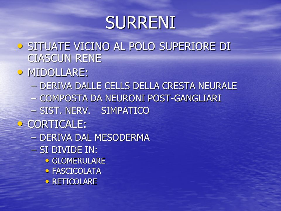 SURRENI SITUATE VICINO AL POLO SUPERIORE DI CIASCUN RENE MIDOLLARE: